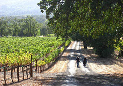 sonoma-country-road